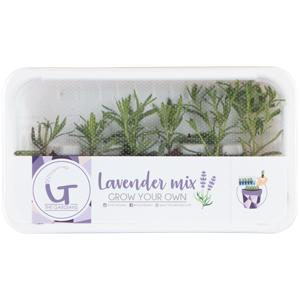 Lavender-Mix-300x300
